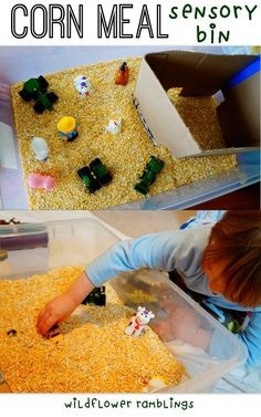 Old MacDonald Had a Farm Sensory Bin {with corn meal} from Wildflower Ramblings