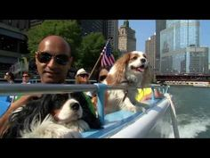 Chicago canine cruise  ($31 per adult ticket & $8 per dog) shows u the best dog friendly destinations in the city  Mercury Skyline Cruiseline  Tips: 1. There is a parking garage right across the street from the river where they load, and don't forget to have them validate your parking pass when you buy a ticket.