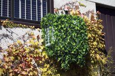 Aire acondicionado tapado mediante funda enredadera verde. The Outsiders, Outdoor Structures, Exterior, Plants, Ideas, Home Decor, Gardens, Home, Hide Air Conditioner