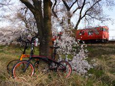 Copyright © とんきち 様 / 2011 vector X20,vectorX27h / 久々に晴れた休日、妻と近くの線路沿いの桜並木へポタリングしました。