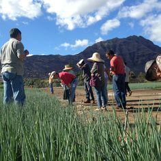Field day at Kobayashi farm