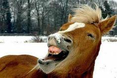 Google Image Result for http://www.kk-advertsing.com/wp-content/uploads/2012/10/Funny-Animals-KKA-10.jpg