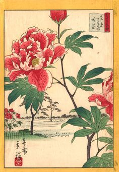 Peonies at Hyakken an 1866 woodblock print by Utagawa Shigenobu depicts the tree peonies at a famous public garden in Tokyo. Japanese Art Prints, Japanese Painting, Art Pictures, Art Images, Peony Drawing, Oriental, Asian Flowers, Japanese Tree, Asian Garden