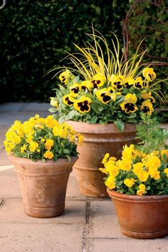 Fall Container Gardening Ideas: Bright Gold Fall Container Gardens