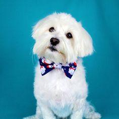 Polar Bear Christmas Bowtie Collar, Festive Polar Bear Bowtie,Collar Accessories,Dog Dickie Bow,Dog Christmas Gift,Dog Lovers Gift, Handmade