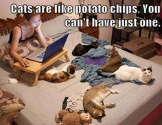 It's Better Than Having Chip Crumbs in the Bed - LOLcats is the best place to find and submit funny cat memes and other silly cat materials to share with the world. We find the funny cats that make you LOL so that you don't have to. Funny Animal Pictures, Cute Funny Animals, Cute Cats, Funny Cats, Amor Animal, Mundo Animal, Crazy Cat Lady, Crazy Cats, Potato Cat