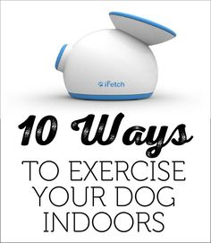 10 Ways To Exercise Your Dog Indoors!