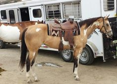 Meet our Owner/Trainer - Shining C Grulla Horses
