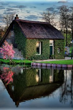 The Netherlands. Thatched roof,stone & climbing vines