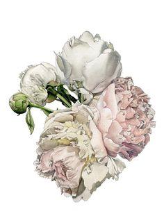 Flowers! love it #oltreilbalcone #fiori #illustration