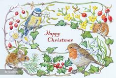 Blue tit, robin and two woodmice with holly, ivy