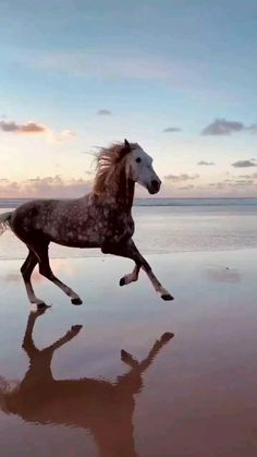 Funny Horse Videos, Funny Horses, Cute Horses, Pretty Horses, Horse Love, Funny Animal Videos, Horses In Snow, Cute Horse Pictures, Beautiful Horse Pictures