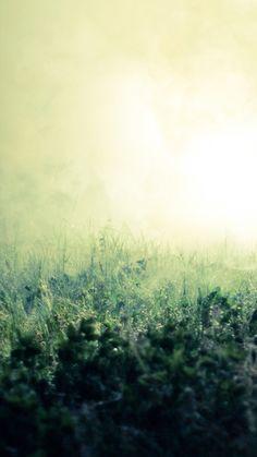 Pure Simple Mist Grass Field Bokeh Background iPhone 6 wallpaper
