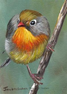Red Billed Leiothrix ACEO Bird Wildlife Original Acrylic Painting Realistic Art in Art, Paintings First Grade Art, Red Bill, Bird Paintings, Painting Art, Watercolor Techniques, Wire Art, Fine Art Gallery, Love Birds, Art For Sale