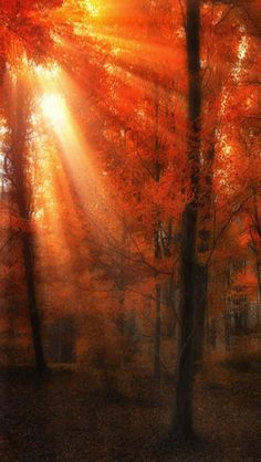 •❈• Fall Colors | Repinned from Carolyn Smith     #nature #photography