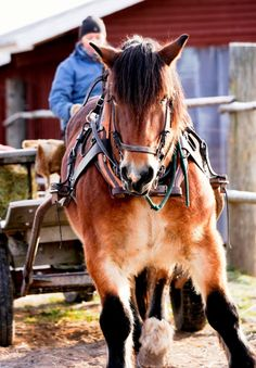 Luomajärven hevoskievari - Small Towns, Beautiful Landscapes, Trekking, Finland, Countryside, Horses, Nature, Animals, Animales