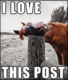 Funny Horse I Love This Post