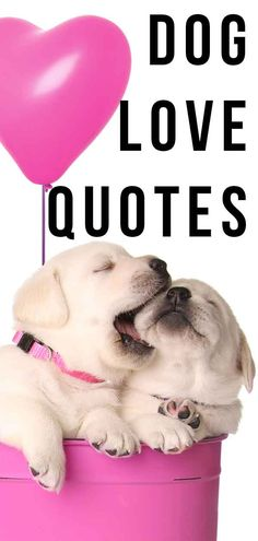 Dog Love Quotes That Express Your Feelings Perfectly Fun Facts About Dogs, Dog Facts, Puppy Love Quotes, Cute Quotes, Hot Dogs, Unconditional Love Quotes, Love Puns, Animal Activist, Puppy Care