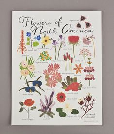 Flowers of North America Print by smalladventure on Etsy
