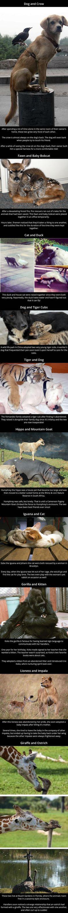 Unusual Animal Friendships - www.viralpx.com