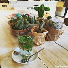 Cactuses & Fresh Mint Tea #cactus #freshminttea #honey #tea #teatime #cake #green #hot #warm #winter #time #cold #weather #hipster #qualitytime  #store #clothes #plants #drink #filter #food #life #lifestyle #iglifestyle