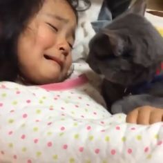 """Don't cry little girl I am here From : keelime-pies: """" mystisnykoto: """" kittehkats: """" """"Cats are cold, detached & unloving."""" """"Cats are not loyal."""" """"A cat will not greet you at the door."""" """"You can not train a cat"""" """"Cats aren't that. Cute Funny Animals, Cute Baby Animals, Animals And Pets, Cute Cats, Funny Cats, Funny Cat Videos, Crazy Cats, Cat Love, Animals Beautiful"""
