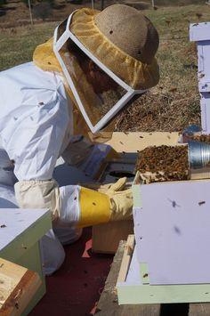 die besten 25 bee suits ideen auf pinterest bienenhaltung bienenzucht im garten und honigbienen. Black Bedroom Furniture Sets. Home Design Ideas