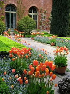 Blooming regally at the historic estate of Filoli in Woodside, California.