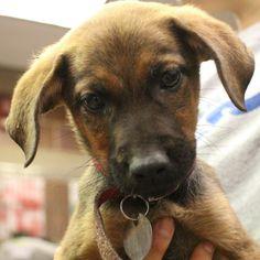 Adopt Me: V34463