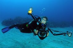 The Value of Underwater Photography