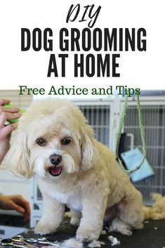 Dog Training Techniques Free Tips and Advice for Grooming your Dog at Home.Dog Training Techniques Free Tips and Advice for Grooming your Dog at Home Dog Training Techniques, Dog Training Tips, Puppy Care, Pet Care, Dog Minding, Dog Grooming Tips, Grooming Salon, Dog Haircuts, Dog Wash