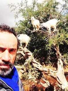 Barsotti vede capre ovunque