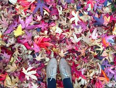 Colourful autumnal leaves - an ode to it NOT being autumn yet