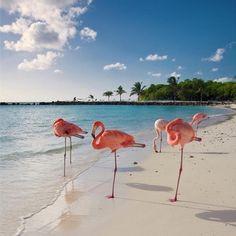 Peachy Flamingos