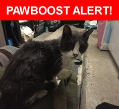 Is this your lost pet? Found in Cedar Park, TX 78613. Please spread the word so we can find the owner!  Gray white sweet sweet cat. Not scared of dogs or children holing him. No chip has claws...pink nose  Nearest Address: Near Mimosa Pass & Sweetgum Trce