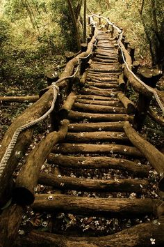 Wooden stairs trail