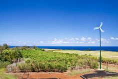 100% organic noni farm on Kauai, Hi.  Producing 100% organic noni raw food and noni Lotion, very potent healing fruit.  www.realnoni4sure.com