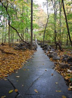 When we think ofpaths through nature, we may first think of somewhat muddytrails carved out willy-nilly through the trees, covered in leaves.But afew landscape architects and architects have be…
