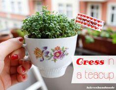 Cress In A Teapot.