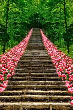 Well, this wont be around my house but it's lovely.Tulip Stairs, Kyoto, Japan
