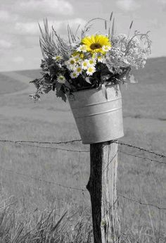 flowers in bucket on pasture fence. Use the fence posts! Country Life, Country Living, Country Charm, Color Splash, Color Pop, Pasture Fencing, Yard Fencing, Bouquet Champetre, Down On The Farm