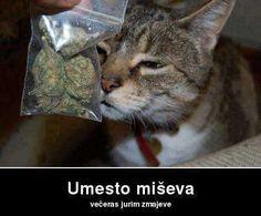 Mačak na travi
