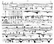 Ramon Y Cajal Drawings - - Yahoo Image Search Results