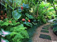 14 tropical plants to create a tropical garden in cold climates . - 14 tropical plants to create a tropical garden in a cold climate - Patio Tropical, Small Tropical Gardens, Tropical Garden Design, Tropical Landscaping, Garden Landscape Design, Landscaping Tips, Tropical Plants, Garden Landscaping, Landscaping Software