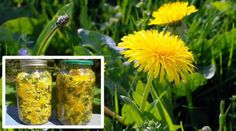 Dandelion Cures Cancer, Hepatitis, Liver, Kidneys, Stomach … Here's How To Use It!
