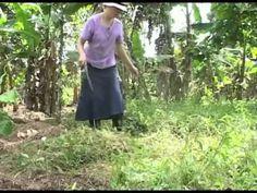 Abonos organicos y agricultura ecologica // vida superior producciones - https://www.youtube.com/watch?v=PhQI0nairv0 FERTILIZANTES NATURALES - DOCUMENTAL AGROECOLOGIA https://www.youtube.com/watch?v=G_yqnefhtG4