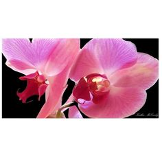10 in. x 19 in. Orchid Canvas Art