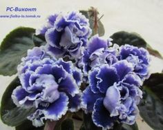 """PC-Vicomte (РС-Виконт) """"Viscount"""" 