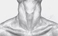 Pencil Collar Bone Drawing by HammersandThreads on Etsy