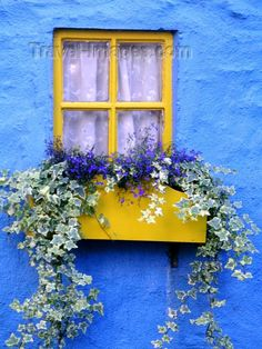 Ireland - Kinsale (County cork): window with flower box - blue house (photo by R. Window Box Flowers, Window Boxes, Flower Boxes, Balcony Flowers, Old Windows, Windows And Doors, Window Planters, Kind Of Blue, Garden Windows